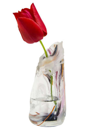 blasted: Red tulip in glass vase on white background
