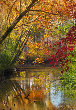 with reflection: View of creek with trees and fall colors