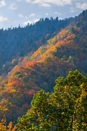 Side of mountain autumn view, Great Smoky Mountains National Park photo