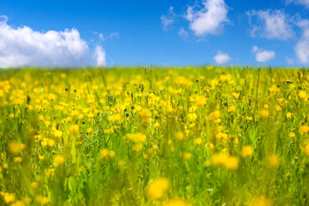 Beautiful spring meadow with buttercups and grass. Stock Photo - 17727977