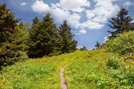 Hiking trail on Roan Mountain, Mitchell County North Carolina photo