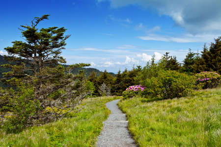 roan: Round Bald, Roan Mountain State Park, USA