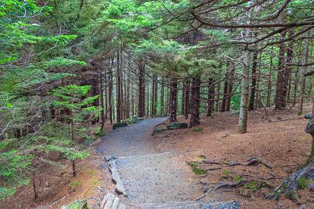 丸ハゲ、魯庵山州立公園、ノースカロライナ、テネシー州で道を探してください。