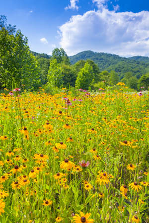Wildflowers growing at Roan Mountain State Park Stock fotó
