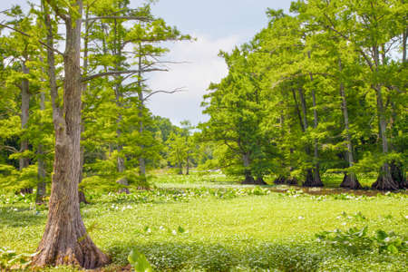 marshy: View of marshy area at Reelfoot National Wildlife Refuge Stock Photo