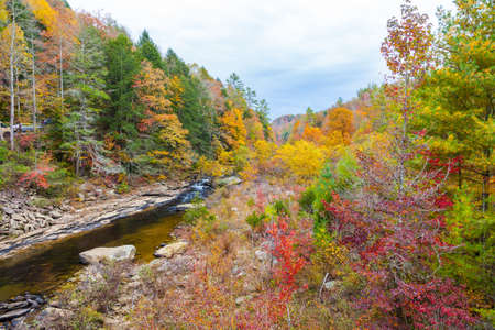 pine creek: View of Clear Creek from Lilly Bridge at Obed Wild and Scenic River