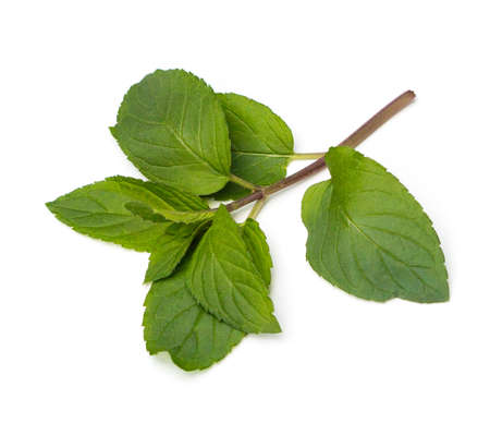 Fresh Chocolate Mint (Mentha piperita) leaves on a white background Stok Fotoğraf