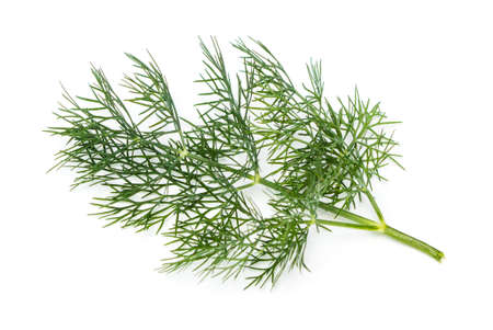 Fresh Dill (Anethum graveolens) on a white background Stock Photo
