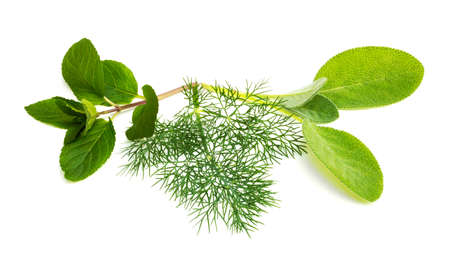 dill: Group of fresh herbs with chocolate mint, dill and sage on a white background Stock Photo