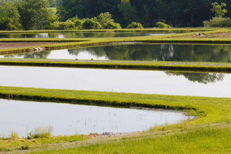 fish breeding: Ponds at a fish hatchery in Clinton, Tennessee