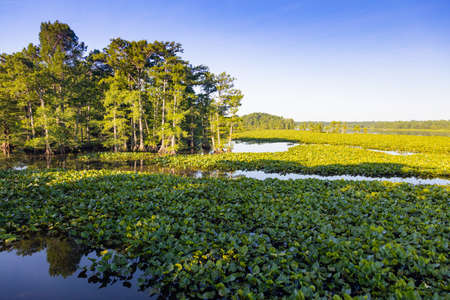 tn: View of swamp at Reelfoot national wildlife refuge Stock Photo