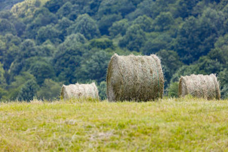 hayroll: Freshly cut and baled round bales of hay