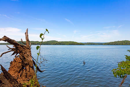 wispy: Piney River Shoals near Watts Bar Dam in Meigs county, Tennessee