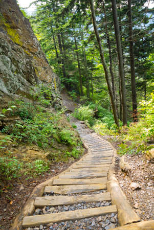 refurbished: Wood and gravel steps on the refurbished Alum Cave Trail in the Great Smoky Mountains National Park