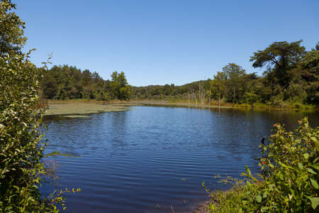 View of the beaver pond and North Cumberland WMA