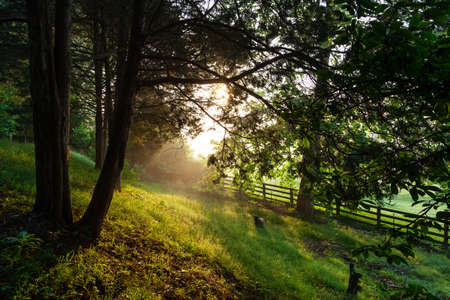 A view of pastures and trees on beautiful late spring morning in rural East Tennessee with morning sunlight. Stok Fotoğraf
