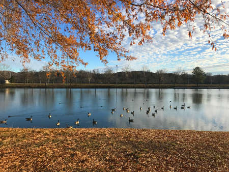 View of the marina and rowing club area at Oak Ridge Marina in Oak Ridge, Tennessee, USA, with Canada Geese and autumn foliage. Stok Fotoğraf