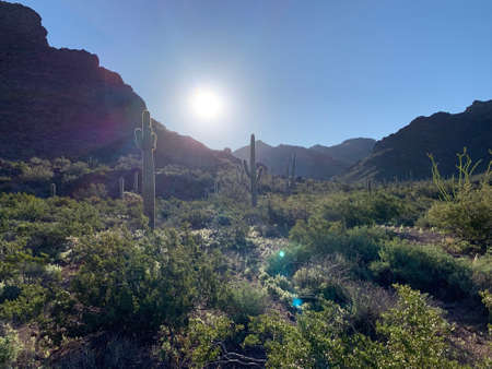 A spring early morning on the trail in Alamo, Canyon, Organ Pipe Cactus National Monument, in southwest Arizona. Stok Fotoğraf