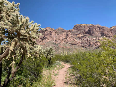 On the trail at Estes Canyon, Organ Pipe Cactus National Monument, Arizona with cholla cactus and mountains.