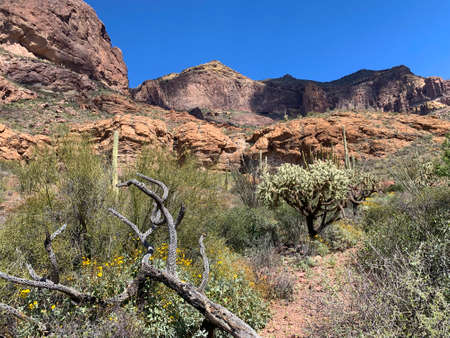 On the trail at Estes Canyon, Organ Pipe Cactus National Monument, Arizona with cholla cactus and rocky Ajo Mountains.