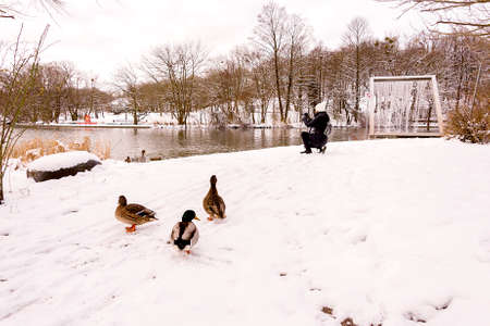 Woman and Ducks in a Winter day by the Lake with Snow photo