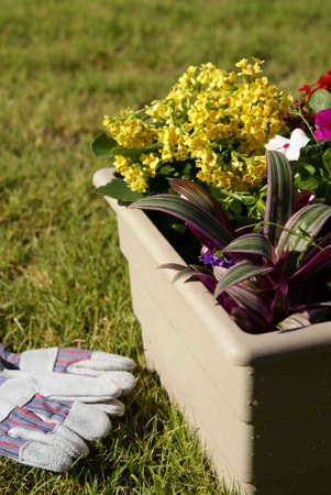 Container garden filled with tropical plants of various colors and textures.