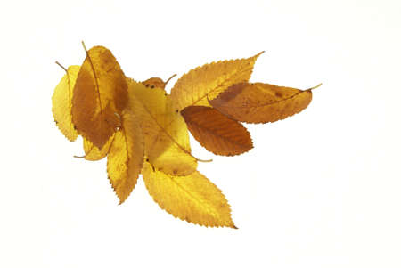 Pile of fall leaves in shades of yellow and brown on a white background Фото со стока