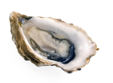 animalia: Close up of one open French Crassostrea Gigas (also known as Pacific) oyster from Brittany, studio isolated on white. Stock Photo