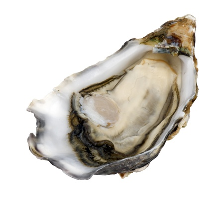 Close up of one open Crassostrea Gigas (Pacific) oyster, isolated on white, no shadows.