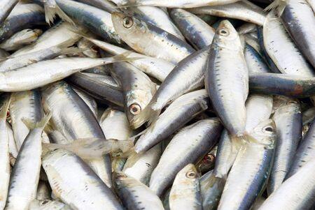 sardinas: Primer plano de sardinas mar Tirreno por el que se en el puesto de un pescador al aire libre. La luz natural disponible. Foto de archivo