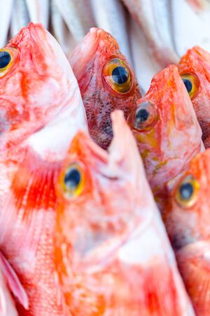sell: Fresh catched redfishes and other seafood on market in Morocco ready for sell Stock Photo