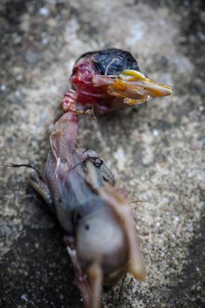 conscience: Dead unborn bird lies on concrete tile out of nest. Abortion metephor