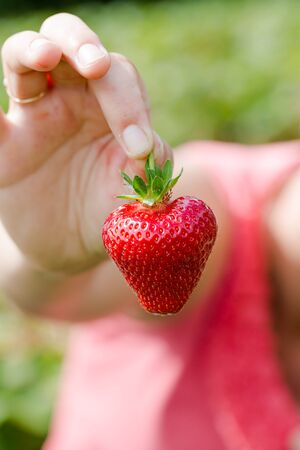 Young adult woman holds in hand fresh sweet strawberry in heart shape. Vertical close up crop with shallow depth of field