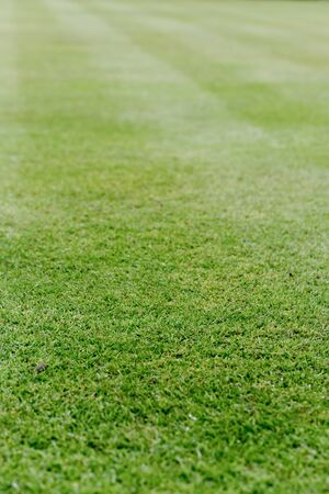 outfield: Perfectly cut grass in garden. Greenery full frame background. Low angle perspective Stock Photo