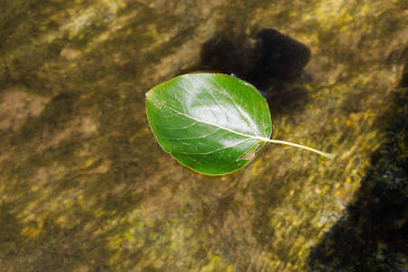 Green leaf flowing with river. Close up macro crop. Horizontal orientation.
