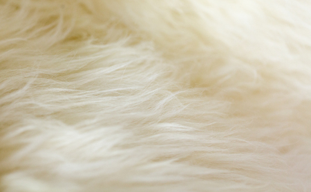 Natural sheepskin fluffy fur rug extreme macro background. Horizontal close up crop, low angle view