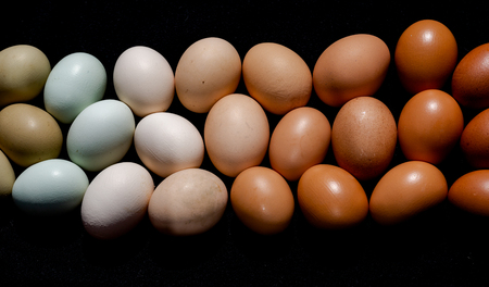 Colourful eggs in brown to green gradient natural tones still image. Full frame opaque cover background Foto de archivo