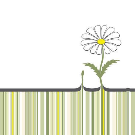 grown: Chamomile, which has grown through the asphalt Illustration