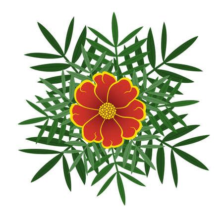 cempasuchil: Tagetes naranjas florece con hojas verdes