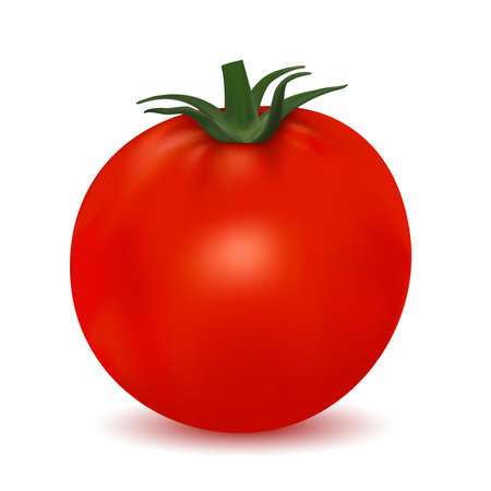 Photo-realistic tomato isolated on white background Vector