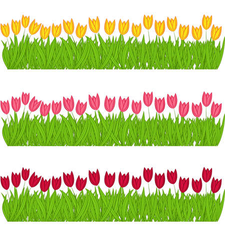 varicoloured: Three rows of colorful tulips on a white background, vector