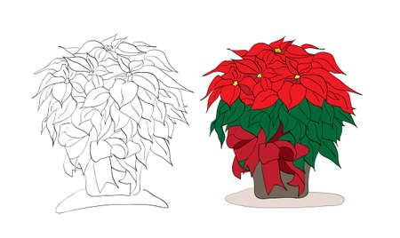 poinsettia: Vector christmas poinsettia color and black and white version on a white background