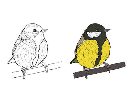 titmouse: Vector silhouette of the small bird on white background