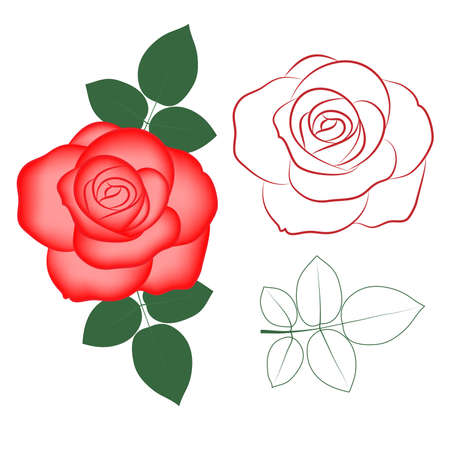 rose tattoo: Red rose painted silhouette and in color, vector