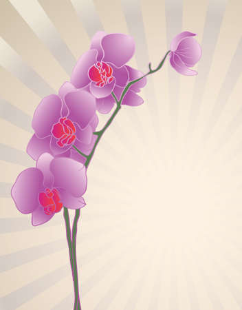 Orchid flower on the background of sun's rays Vector
