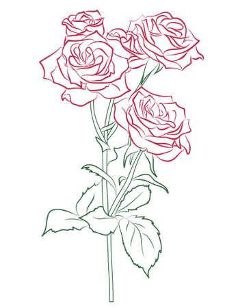 dibujos lineales: Rosa roja silueta pintada en el color y el vector,