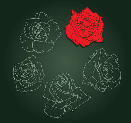 Five roses painted silhouette and in color, vector