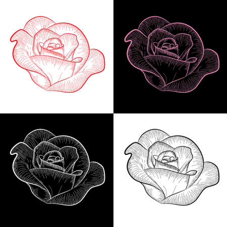 Four roses painted silhouette and in color, vector Vector