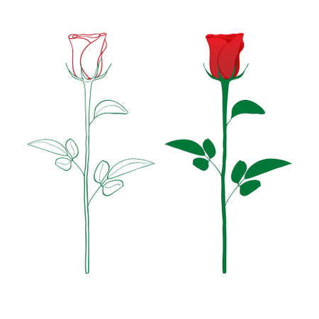 single line: Red rose painted silhouette and in color, vector