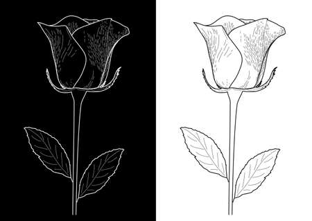 hand drawn rose: White rose on a black background and a black rose on white background Illustration